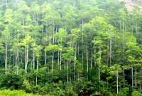 Thông báo kết luận của Phó Chủ tịch UBND huyện Nguyễn Hồng Hiệp tại cuộc họp chỉ đạo triển khai các phương án phòng cháy, chữa cháy rừng và phòng chống đuối nước trên địa bàn huyện Tam Đảo